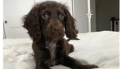 [Video] Chú chó có hàng lông mi đẹp tuyệt