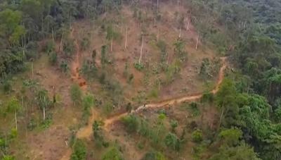 Khởi tố, bắt tạm giam 4 tháng hai cán bộ Ban Quản lý rừng phòng hộ huyện Qùy Hợp