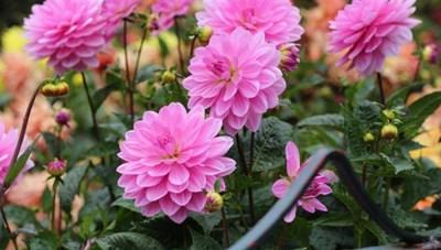 5 loại cây trồng nở hoa rực rỡ đón Tết Nguyên đán