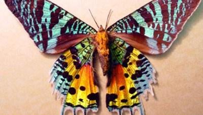 Những loài vật sắc màu đẹp ấn tượng