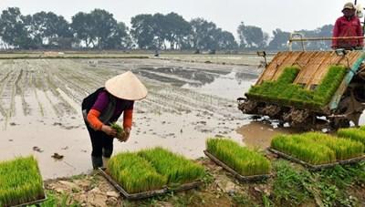 Hà Nội: Hầu hết các huyện đã lấy đủ nước gieo cấy lúa vụ Đông Xuân