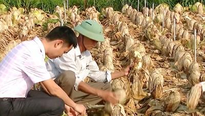 Người trồng rau 'méo mặt' khi bán cả xe rau không bằng... 1 công phụ hồ