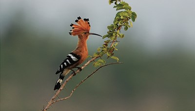 [ẢNH] Khám phá những loài chim xinh đẹp ngỡ ngàng
