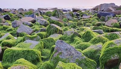 [VIDEO] Du khách đổ xô check-in bãi đá 'rêu xanh' đẹp nhất Phú Yên