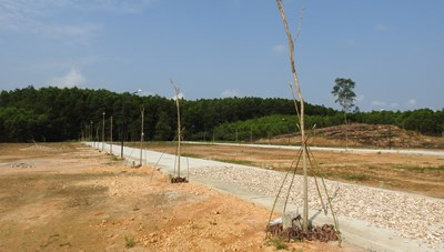 Quảng Trị: Chưa chuyển đổi mục đích đã phân lô bán nền trên đất trồng cây