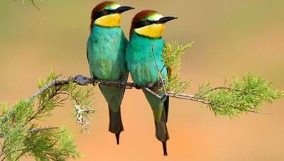 [ẢNH] Khám phá những loài chim sặc sỡ sắc màu ấn tượng