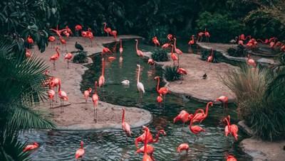 [ẢNH] Thế giới những loài chim tuyệt đẹp tô điểm thiên nhiên