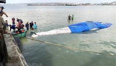 Bình Thuận: Cá Ông dài 15 m lụy ngoài khơi được đưa vào bờ