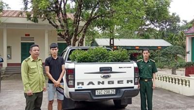 Quảng Ninh: Phát hiện ô tô vận chuyển trái phép 11 cây tùng đen