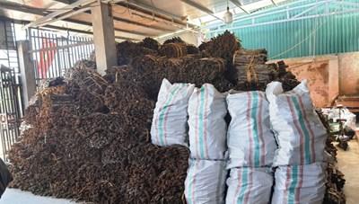Quế Quảng Ninh chuẩn bị xuất khẩu sang châu Âu