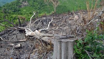 Ngăn chặn buôn bán động vật hoang dã, phá rừng
