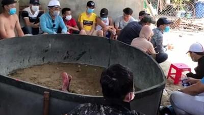 15 người xem đá gà trong dịch Covid-19 bị phạt 225 triệu đồng