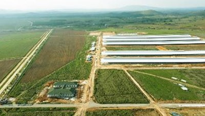 Siêu dự án trang trại của Vinamilk tại Lào sẽ 'cho sữa' vào đầu năm 2022