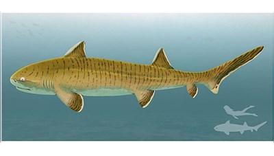 Phát hiện hóa thạch loài cá mập 150 triệu năm tuổi