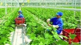 Gỡ vướng cho doanh nghiệp đầu tư vào nông nghiệp