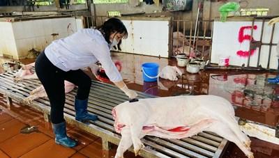 Vì sao điểm giết mổ gia súc, gia cầm tập trung èo uột?