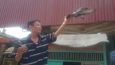 Độc đáo nghề huấn luyện chim bồ câu