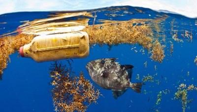 Trải nghiệm đại dương trong triển lãm 'Thức'