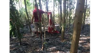 Dập cháy rừng, phát hiện thi thể người đàn ông 78 tuổi