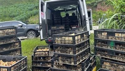 Quảng Ninh: Bắt giữ xe ô tô vận chuyển hơn 23.000 con gà không rõ nguồn gốc