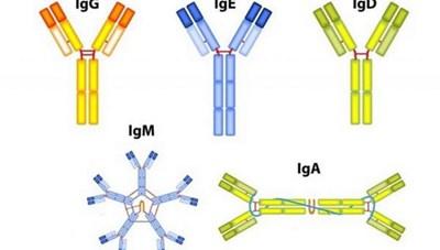 Tìm ra kháng thể tạo miễn dịch với Covid-19