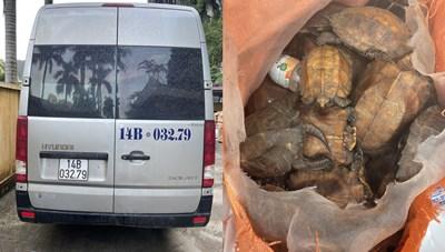 Quảng Ninh: Phát hiện xe đò chở 34 'khách' là rùa quý hiếm