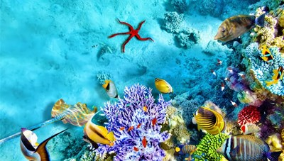 'Chất sống' san hô và giá trị tiềm ẩn của biệt thự Coral