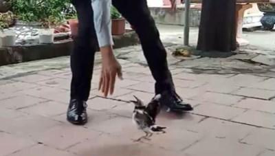 Thú vị chú chim sáo 'cà khịa' khách đến chơi nhà