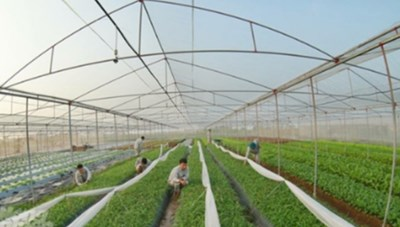 Hưng Yên: 100% số xã đạt chuẩn nông thôn mới