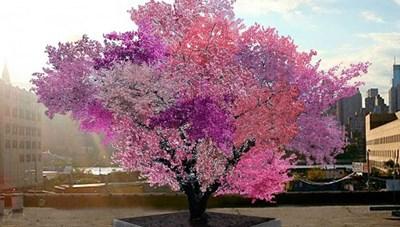 [ẢNH] 15 loài cây tự nhiên đẹp nhất thế giới