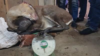 Kêu gọi cộng đồng chấm dứt buôn bán động vật hoang dã