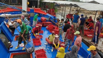 Ninh Thuận: Ngư dân đón lộc biển đầu năm