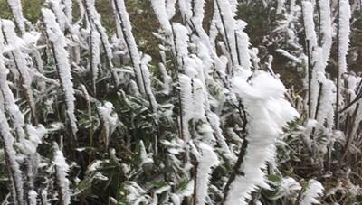 Băng giá trắng xóa ở đỉnh núi Mẫu Sơn