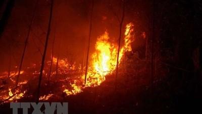 Quảng Ninh: Làm rõ nguyên nhân vụ cháy rừng thông