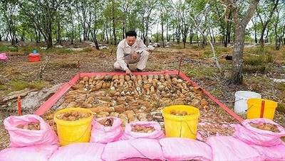 Quảng Trị: Xử lý hơn 1.400 vật liệu nổ