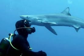 [VIDEO] Khoảnh khắc cá mập trắng tấn công thợ lặn dưới biển