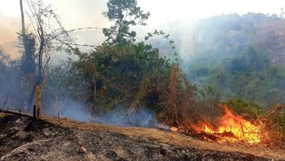 Quảng Nam: Gần 200 người tham gia chữa cháy rừng phòng hộ