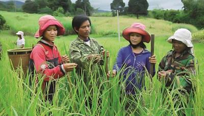 Lào Cai: Giảm tỷ lệ hộ nghèo