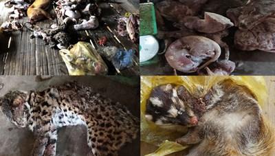 Thanh Hóa: Bắt giữ hai đối tượng tàng trữ 49 cá thể động vật quý hiếm