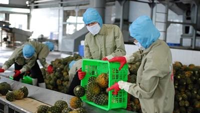 Nông sản xuất khẩu châu Âu: Áp lực vượt rào cản phi thuế quan