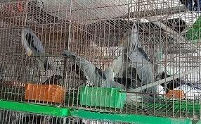 Đề nghị đóng cửa các chợ cùng các địa điểm có buôn bán động vật hoang dã bất hợp pháp