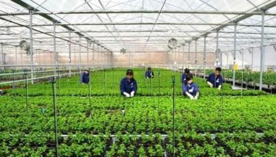 Gỡ khó cho vay nông nghiệp công nghệ cao