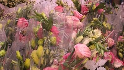 Hoa, cây cảnh nhập khẩu tăng trong dịp Tết