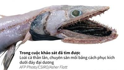 [Infographics] Hơn 100 loài cá quý hiếm được kéo lên từ đáy của biển