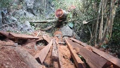 Khẩn trương làm rõ vụ gần 143 m3 gỗ quý hiếm bị chặt hạ
