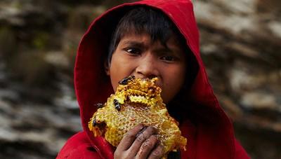 Lấy mật ong ở Nepal