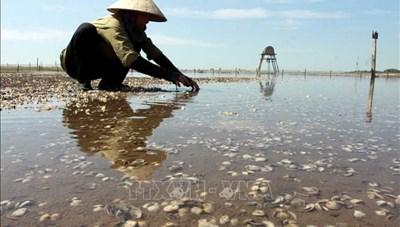 Thái Bình: Khuyến cáo người nuôi ngao tạm dừng thả ngao giống