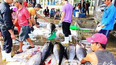 Ngư dân Nam Trung Bộ đón lộc biển đầu năm