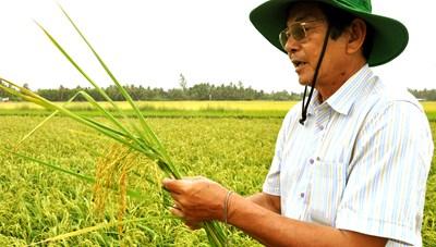 Anh hùng lao động và hành trình đi tìm hạt gạo Việt ngon nhất thế giới