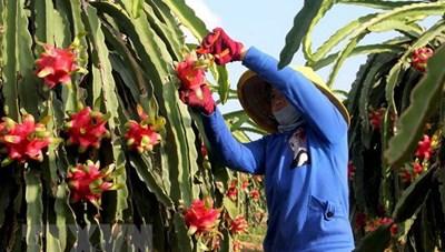 Việt Nam-Ấn Độ bàn biện pháp tháo gỡ khó khăn cho nông thủy sản